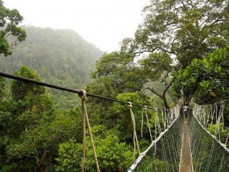 Hutan Wanagama, Wisata Alam Jogja, hutan Wisata, Hutan Jogja