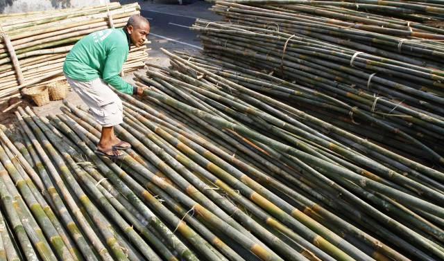 Penanaman Bambu,  Kabupaten Sleman, Budidaya Bambu