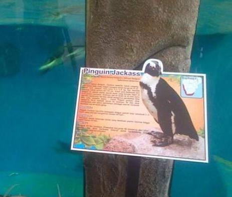penguin-di-gl-zoo_