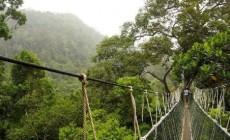 Permalink to Hutan Wanagama Wisata Alam Jogja