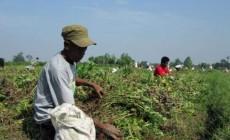Permalink to Babinsa dan Petani Bersatu Sukseskan Program Pemerintah