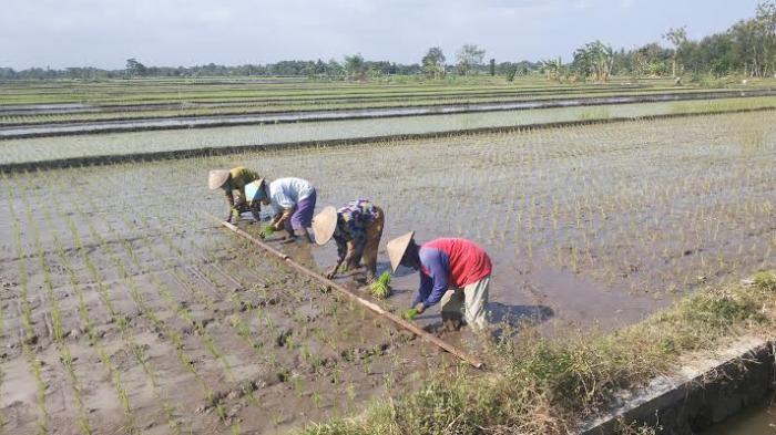 Permalink to Pertumbuhan Ekonomi Pertanian di Sleman Menurun
