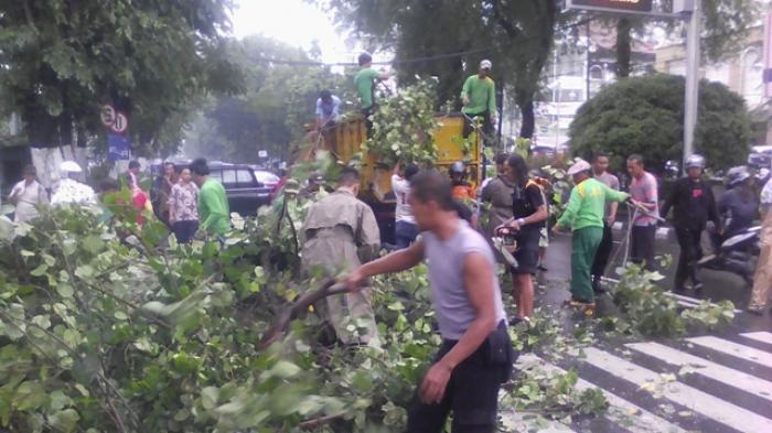 Permalink to BLH Jogja Berencana Asuransikan Pohon yang Rawan Tumbang
