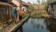 Permalink to Mahasiswa KKN Undip 2020 Perkenalkan Budidamber dan Probiotik Untuk Ikan kepada Warga