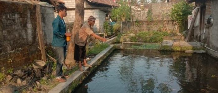 Mahasiswa KKN Undip 2020 Perkenalkan Budidamber dan Probiotik Untuk Ikan kepada Warga
