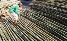 Permalink to Penanaman Bambu Kabupaten Sleman Diperluas