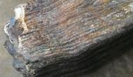 Permalink to Fosil Ini Singkap Kehidupan Jutaan Tahun di Dekat Pindul